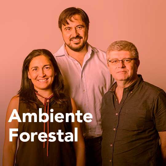 Ambiente forestal